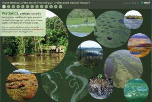 Wetland Interactive Story Map